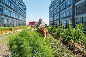 a staten island urban farmer the new york times