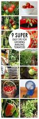 Tips For Planting A Vegetable Garden by 25 Best Ideas About Home Vegetable Garden On Pinterest