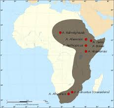 africa map great rift valley the garden of