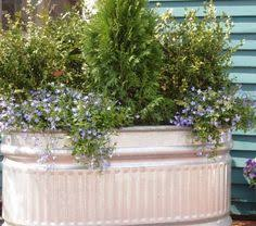 Galvanized Trough Planter by Gardening In Galvanized Troughs Planter Made From Oval