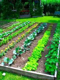 planning a garden layout vegetable garden layout app the garden inspirations