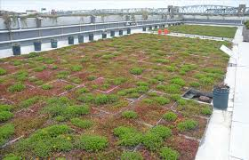 types of green roof systems home roof ideas