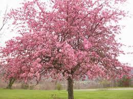 so many pretty trees i see aspen falls