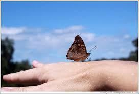 butterfly on my path to garganta diablo photo id 19344