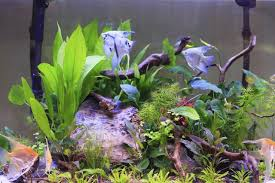 How To Clean Fish Tank Decorations How To Clean Artificial Aquarium Plants Cuteness