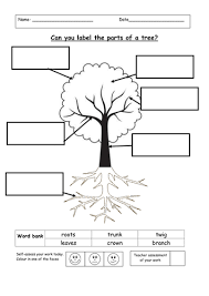 label the parts of a tree by ruthbentham teaching resources tes