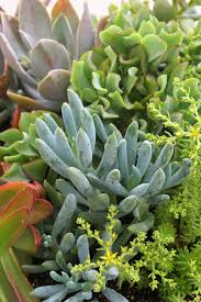 Low Light Succulents by 12 Succulents Worth Knowing Hgtv
