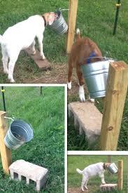 Goat Home Decor Best 25 Goat Ideas Ideas On Pinterest Goat Pen Diy Goat Toys