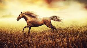 Horse Murals by Best Horse Wall Murals 4k Animal Images Free Field Wild Life