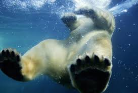 Animal Planet Documentary Grizzly Bears Full Documentaries - best nature documentaries on netflix itunes more thrillist