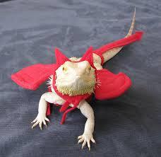 Bearded Dragon Halloween Costume Shoulder Angel Choices