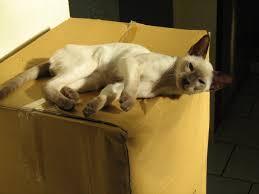 gerüche die katzen nicht mö 5 tipps neue katze zieht ein katzen erfolgreich aneinander gewöhnen