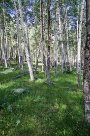 deciduous trees rocky mountain national park u s national park