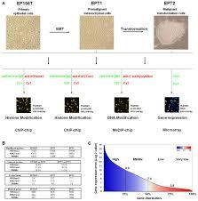 global profiling of histone and dna methylation reveals epigenetic