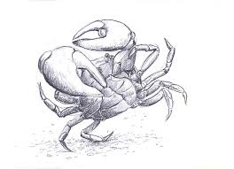 crab sketch images reverse search