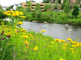 our staff u2014 mill river park collaborative