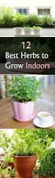 best indoor herb garden gardening ideas