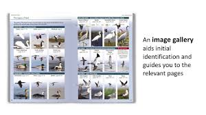 9780691158891 britain u0027s birds an identification guide to the