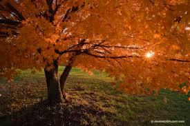 fall maple tree iowa photograph scenic landscape nature