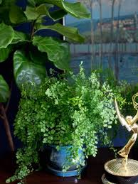 plants that don t need sunlight to grow plants you can grow without sunlight the joy of plants