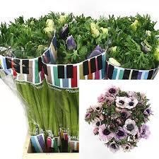 Flower Wholesale Wholesale Dutch Flowers Wholesale Floral Supplier