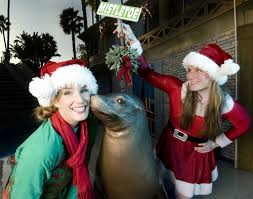 seaworld san diego u0027s christmas celebration