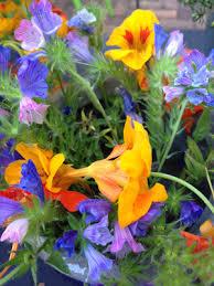 l u0027école des fleurs popfleurs