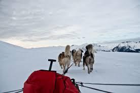 free images mountain snow winter vehicle season dog sled