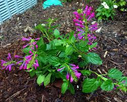 plants native to florida my florida backyard may 2010
