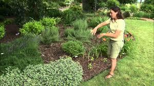 edible ornamentals plant selection 6 23 12