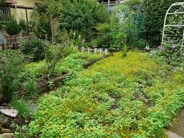tokyo diy gardening archive overgrown suburban plot