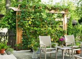 backyard patio with trellis and grapes growing grapes at home