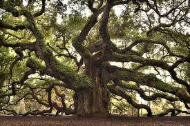 top 9 most interesting trees in the world best trees