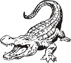 pictures of alligator free download clip art free clip art
