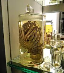 face hugger found in jar at london natural history museum r