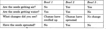 ncert solutions for class 5 evs chapter 5 seeds and seeds learn cbse