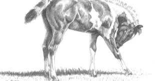 animal drawings etsy drawing art gallery