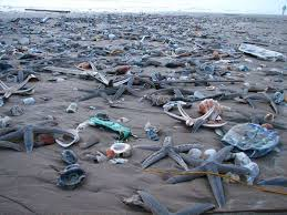 weather mustang island tx thousands of healthy starfish mysteriously wash up on south padre