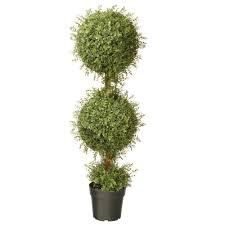 Ny Topiary - national tree company 48 in mini tea leaf 2 ball topiary with