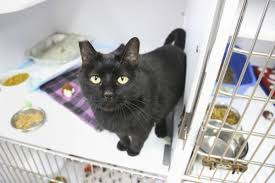 cats overflow the shelter the news virginian dailyprogress com