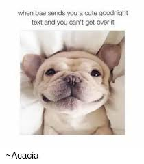 Goodnite Meme - 20 cutest goodnight memes sayingimages com love brainy quote