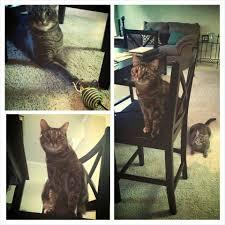 cat running into glass door prestigious pets 34 photos u0026 66 reviews pet sitting east