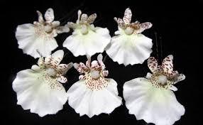 oncidium orchid oncidium orchid hair pins set of 6
