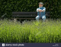 Field Bench Happy Old Man Sitting On Park Bench With Lavender Field In The