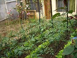 fertilizing the vegetable garden 7 611 extensionextension