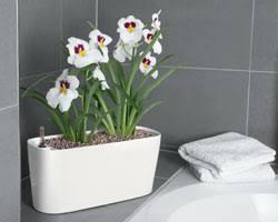 plante pour cuisine dans la maison a chaque pièce ses plantes gamm vert