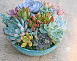 succulent arrangements arrangement in turquoise container bowl large