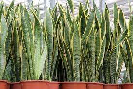 Plants For The Bedroom by Which Is The Right Plant For Your Room Healthinasecond Com
