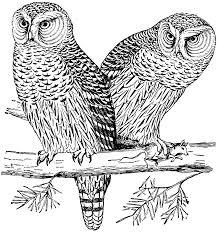 the hawk or canada owl clipart etc