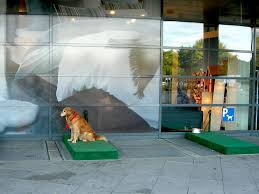 ikea parking lot dog parking lot at ikea in germany dogs can park while you shop